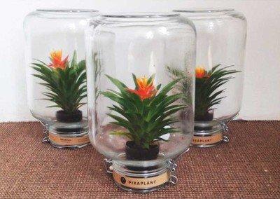 Da Hutspot tante piante e fiori design